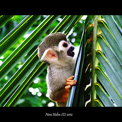 cute little monkey (nora2810) Tags: cute nature animal monkey comel monyet apekatt fujifilmfinepixs9500 flickraward