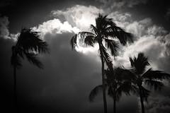 Hawaii2-7