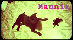 "Mannix • <a style=""font-size:0.8em;"" href=""http://www.flickr.com/photos/73968363@N02/6676791869/"" target=""_blank"">View on Flickr</a>"
