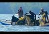 Fisherman (Sara-D) Tags: people net boat fishing fisherman asia lagoon sl sri lanka srilanka ceylon lk fishingboat southasia sarad negambo saranga sarangadevadealwis sarangadeva negambolagoon