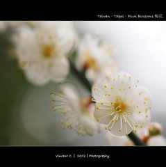 FP1155526 (yiminchiang) Tags: flower blossoms plum olympus 50mmf20 2012 e5