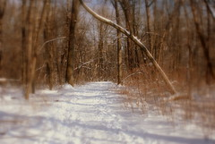 Dwight H. Perkins Woods (Renee Rendler-Kaplan) Tags: trees winter snow cold sunshine forest woods nikon gbrearview sunday january tracks trails evanston grantstreet gapersblock 2012 wbez chicagoist evanstonillinois nikond80 reneerendlerkaplan dwighthperkinswoods