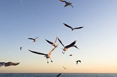 Takeoff (Firescu.C) Tags: winter sunset sea sky seagulls france birds digital nice nikon 24 2011 afd d7000 nikon24mmafdf28