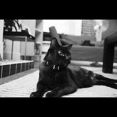 Meow (Dustin Diaz) Tags: goodbye