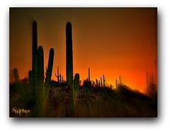 ~ ~ Sunset in the Desert ~`~ (stephgum32807) Tags: sunset arizona cactus zonsondergang nikon sonnenuntergang pôrdosol kodachrome 日落 puestadelsol ηλιοβασίλεμα غروب organpipe západslunce focalzoom
