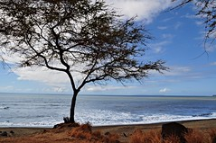 The Shoreline (janetfo747) Tags: ocean blue sky cloud tree beach weather warm day pacific cloudy shore kauai poipu lihue yahooweather regionwide