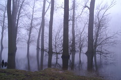 Foggy forrest in the mist (Eddy .... terug van weg geweest :)) Tags: trees winter mist lake tree nature water misty fog mos river dawn reflex cool bomen natural forrest path branches foggy pad natuur sigma atmosphere boom silence dynax maas dijk reflexion tranquil dike atmospheric waterside tak takken mistig peacefull uiterwaarden branche struik rivier spiegeling uiterwaard natuurgebied stilte slience coolshot struiken hoogwater quietscene reflexinwater