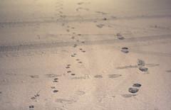 non sono sola (Sara Fasullo) Tags: street snow steps io together neve footsteps livorno freddo orme ubik