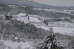 Nevicata del 31 gennaio 2012 (pepolino) Tags: trees italy snow tree nature alberi italia natura tuscany neve toscana albero bianco nevicata arezzo february2012 febbraio2012