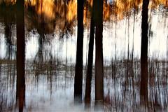 Golden Glow (ebergcanada) Tags: winter snow abstract tree nature forest edmonton icm millcreek intentionalcameramovement