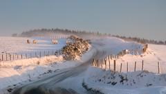 Snow (khalliballi) Tags: snow sikh pembrokeshire polariser preseli d80 18105mm