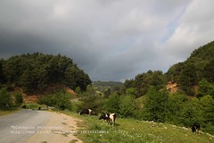 Taurus, landscape near Yeniky (blauepics) Tags: road cloud tree green nature animal turkey landscape kuh cow strasse trkiye natur wolke trkei toros grn taurus landschaft baum tier dalar