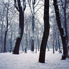 Antimonio (ttan_) Tags: wood mamiya tlr c220 film alberi forest kodak neve bologna portra margherita giardini bosco foresta 160 pellicola biottica