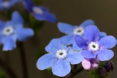 sehr kleine Blüten (thomaskappel) Tags: kleine sehr blten