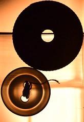 Smaller than a coin (dunlendino14) Tags: macromondays nikonmicro105mm nikond750 smallerthanacoin