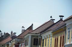 Freistadt Rust (anuwintschalek) Tags: austria spring rust may roofs stork burgenland frhling roofscape katus storch kevad dcher kurg toonekurg rustamneusiedlersee d7k katused kurepesa nikond7000 freistadtrust 18140vr