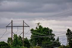 Almost Got Away (brev99) Tags: trees bird clouds cloudy photos flight wires egret whiteegret bif birdinflight suburbanwildlife d7100 topazdenoise topazdetail cacorrection tamron70300vc dxooptics8