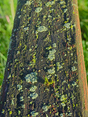 P5147333 (Paul Henegan) Tags: blur macro bench dew lichen mold earlymorninglight