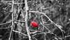 dettagli (ilaria_pascucci_photographer) Tags: canon dettagli prato galleria gattonero eos1200d