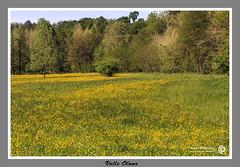 Valle Olona 3 (filippi antonio) Tags: flowers trees italy verde green primavera nature field grass alberi landscape spring italia meadow natura erba fiori lombardia paesaggio prati valleolona lonateceppino