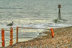 Beach in HDR (TD2112) Tags: sea england beach water coast stones seagull shoreline pebbles shore hastings hdr highdynamicrange tonyduke