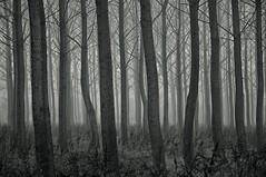 (Farlakes) Tags: trees mist dutch fog forest farlakes
