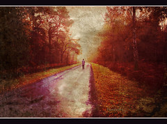 Sentinels (pixellesley) Tags: road autumn trees texture dark person norfolk walker ferns looming gloaming ourtime hss memoriesbook tatot magicunicornverybest