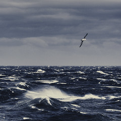 Black Browed Albatross (Christopher DiNottia) Tags: ocean light sea wild sky color art beach nature wet water ecology colors canon outside outdoors bay coast interesting intense sand marine scenery waves mood peace view sink good earth tide country salt deep environmental wave scene spray explore coastal maritime surprise vista environment remote aquatic wilderness oceans quite powerful eco tidal frontier tides exciting amaze godly highseas