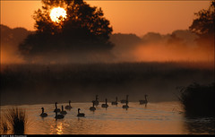Just another new day (Rob Millenaar) Tags: light mist holland topf25 sunrise landscape geese scenery nationalparkdwingelderveld smitsveen