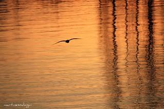 Contre-jour et reflets