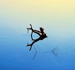 kilg/sticking out (palinta) Tags: blue tree nature water yellow out branch minimal reflexions sticking palinta