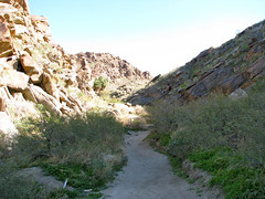 Palm Canyon Trail - 04 Photo