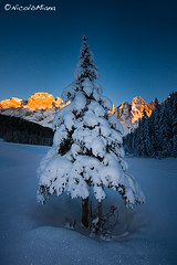 Abete solitario in Val Venegia (Nik!) Tags: winter tramonto neve inverno dolomiti mulaz paledisanmartino enrosadira valvenegia bureloni