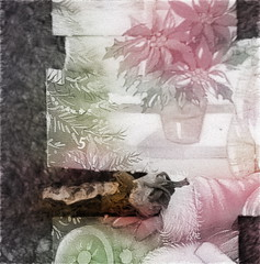 Adventus - Advent calendar 5. December - Apple of Paradise - Hommage a Friedemann der Teppichweber (hedbavny) Tags: vienna wien red stilllife green art abandoned yellow tomato gold austria sterreich stillleben paradise outsiderart advent decay assemblage infinity kunst shangrila weihnachtsmann gelb mementomori dried mold transition decomposition adventcalendar tomate adventkalender beton vanitas warten snger vergnglichkeit paradies schimmel verfall weihnachtsstern unendlich naturezamorta endlos ankunft ottakring friedemann rotgrn verwandlung endlessness vertrocknet getrocknet gehsteig erwartung schimmelpilz paradiesapfel 1160 paradeiser aktionismus solanumlycopersicum 16bezirk eingetrocknet adventus appleofparadise wienerlied hanslschmidweg dehumidified hanslschmid wartenaufweihnachten friedemann1 friedemannderteppichweber wartenaufdenweihnachtsmann johannschmid hedbavny friedemannhoflehner ingridhedbavny