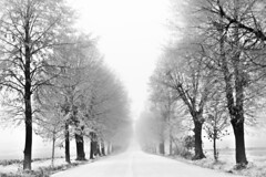 Winter Avenue (M4j4) Tags: autumn winter white snow black fog avenue maribor megla pivola drevored