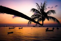 Thailand Sunset (v-_-v) Tags: sunset beach thailand island palmtree longboat kohtao