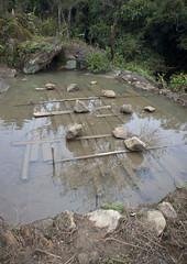 Wood In The Water, Sapa, Vietnam (Eric Lafforgue) Tags: wood water vertical pond rocks asia exterior mud stones nopeople vietnam viet vegetation asie muddy sapa colorphoto vietname  wietnam northernvietnam reddao reddzao daopeople    vi