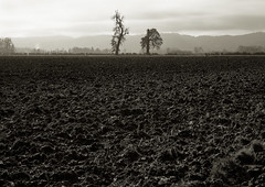 Two Trees, Sauvie Island (austin granger) Tags: longexposure film field oregon portland oak mud farm bare crop stripped oaktree barren fallow largeformat cultivation sauvieisland plowed deardorff neutraldensity austingranger