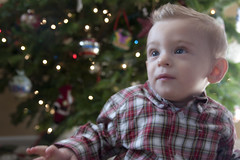 First Christmas (Hepcat75) Tags: christmas decorations boy portrait tree canon eos rebel kid holidays child sweet innocent decoration adorable son card portraiture decor xsi project365 450d