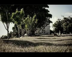 Atardecer Matancero (Rey Cuba) Tags: city blue sunset sky plants color luz colors architecture buildings island atardecer arquitectura cuba ciudad colores nubes rey invierno caribbean walls isla sombras caribe matanzas fotoscuba fotografiacubana d300s nikond300s cubaphoto reycuba cubafoto