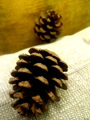 two different colours 2 different lives , cones together (dimitra_milaiou) Tags: world life christmas xmas winter friends 2 two people color colour love nature season greek happy design living nokia europe december different natural cone bokeh spirit live pair decoration hellas happiness athens line greece thoughts fabric together similar planet split minimalism decor athina 2012 separate dimitra hellenic x6          milaiou