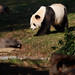 SMITHSONIAN'S NATIONAL ZOO RECEIVES $4.5 MILLION TO FUND GIANT PANDA PROGRAM