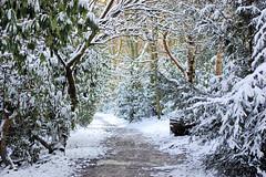 DSC_0057  Towneley Park, Burnley, UK, 2009 (SWJuk) Tags: park uk winter england white snow cold ice home nikon lancashire 2009 burnley d40 towneley nikond40 dec2009 myfreecopyright swjuk mygearandme mygearandmepremium mygearandmebronze mygearandmesilver mygearandmegold mygearandmeplatinum