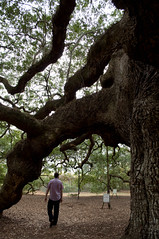 Doug and the Angel Oak (Adrianne Behning Photography) Tags: tree charlestonsc angeloak hugetree douglaskramernye
