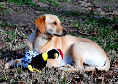 Guarding my duck! (Well maybe it