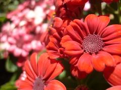 Pausa (0_Detalles_0) Tags: flores color luz desenfoque dulce ptalos delicado suaves apasionado radiante