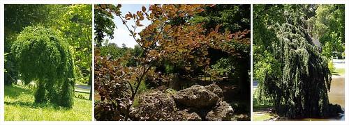 Schlosspark Eisenstadt- flora 2011-06