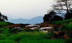 ecosystem/Monsoon (biodiversity western ghats) Tags: monsoon lonavala westernghats ambyvalleyroad