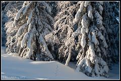Tracks and Trees (mmoborg) Tags: winter snow cold kyla vinter sweden sverige snö dalarna 2012 koppången mmoborg mariamoborg