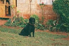 PHOTO OF THE WEEK - 9 January 2012 (UNMAS HQ) Tags: lebanon dog major un unitednations hero landmine peacekeeping humanitarian somalia mineaction dpko unmas orolsi deminingdog